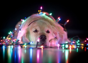 XMas Dog - Frohe Weihnachten wünscht ALSEHK Computer Bremen